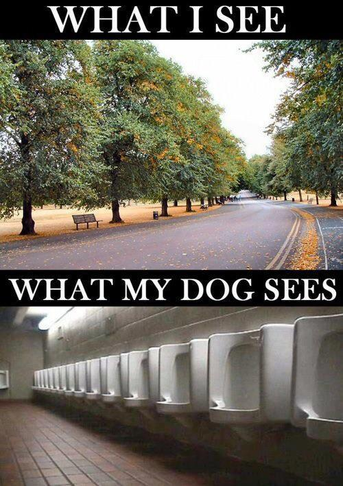What I see vs. what my dog sees - funnypictures.me
