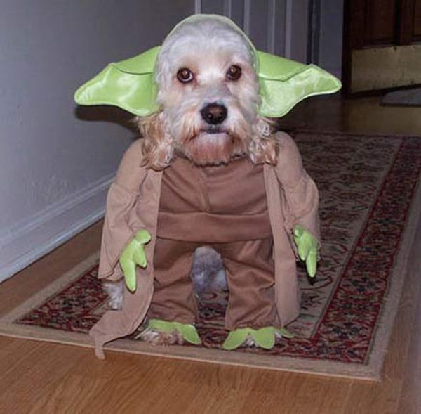 Funny Halloween Dog Costumes - funnypictures.me