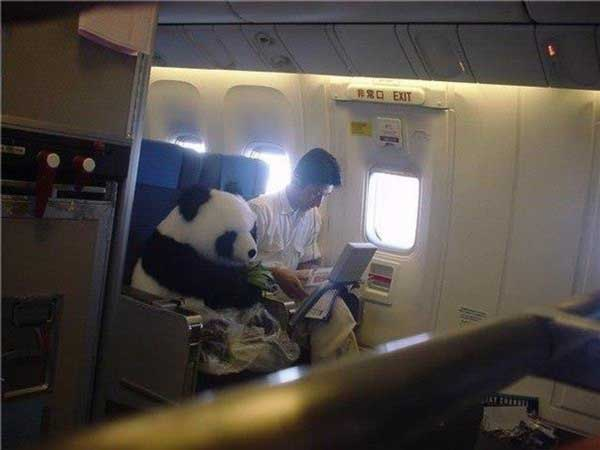 Meanwhile on China airways - funnypictures.me