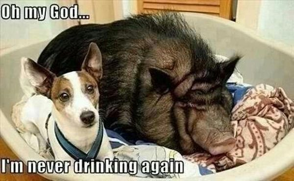 Morning After a Night Out - funnypictures.me