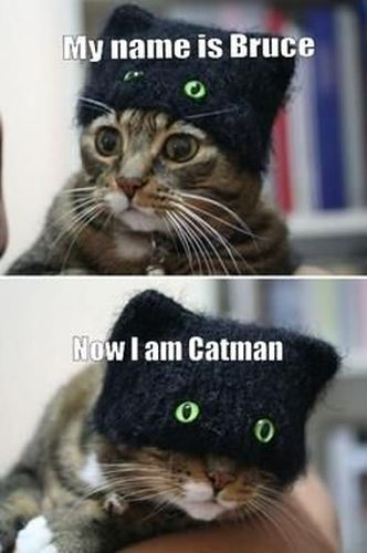 Catman - funnypictures.me