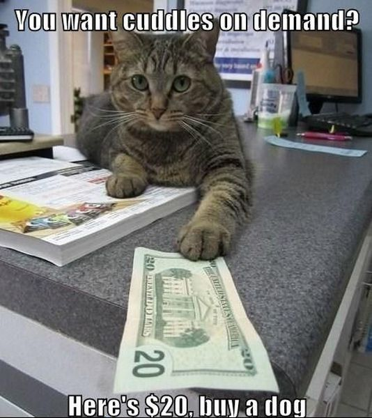 You Want Cuddles On Demand? - funnypictures.me