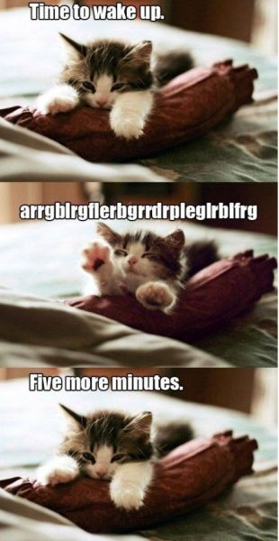 Five More Minutes - funnypictures.me