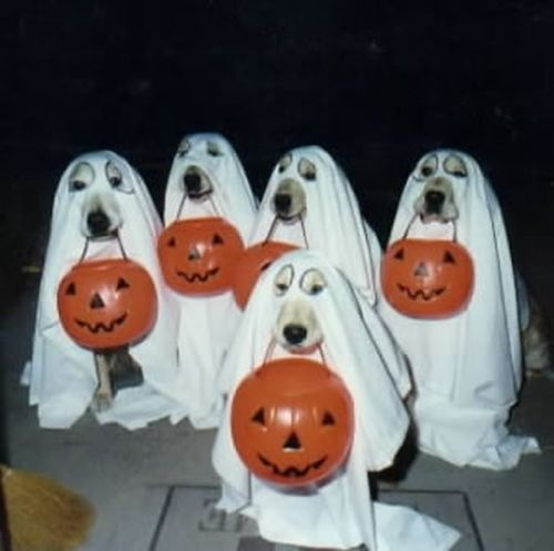 Ghost dogs - Funny pictures