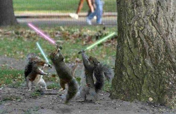Jedi Squirrel - funnypictures.me