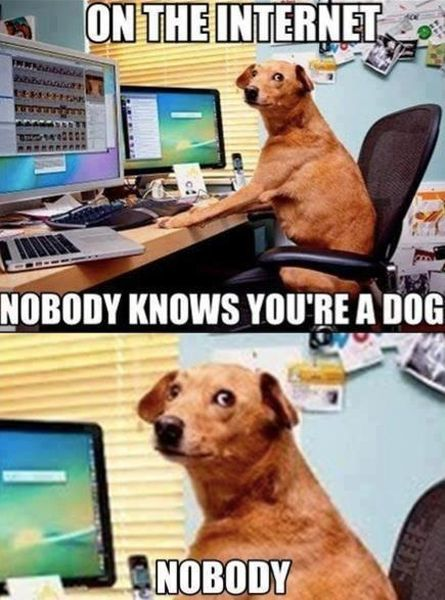 Dog On The Internet - funnypictures.me