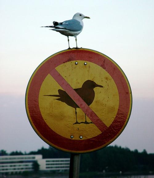 Rebellious seagull - funnypictures.me