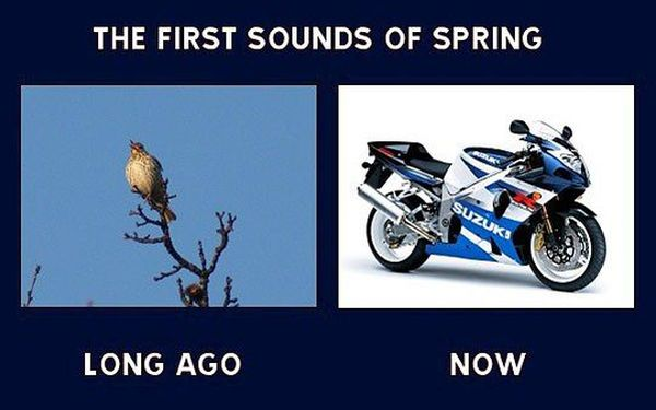 The First Sounds Of Spring -Funny picutres