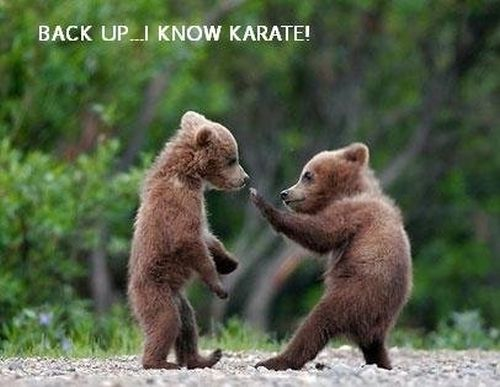 Karate Teddy - Funny Pictures