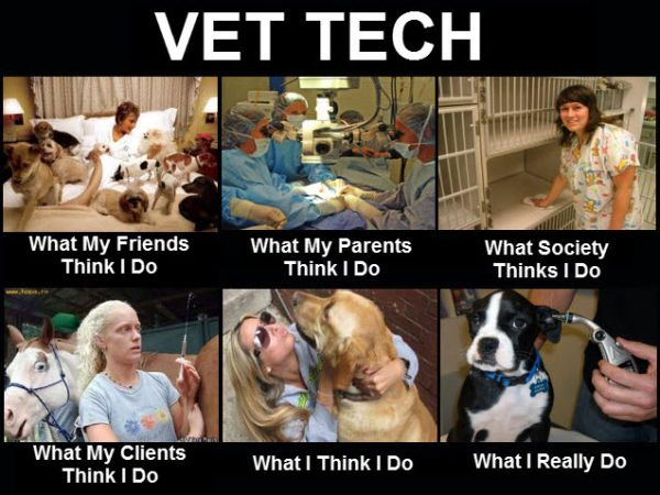 Vet Tech - Funny Pictures