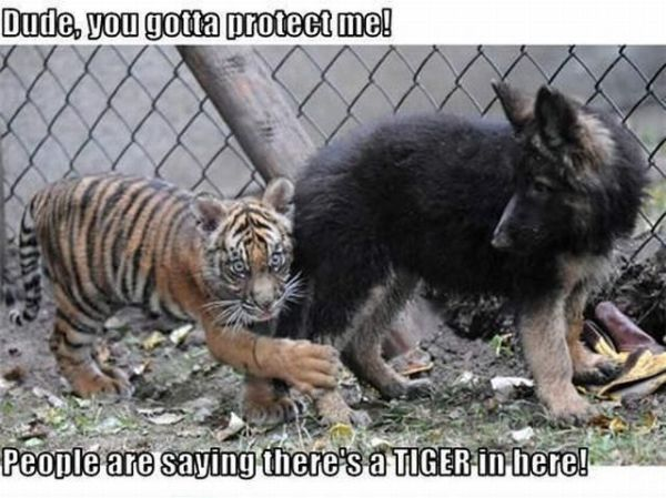 You Gotta Protect Me! - funnypictures.me