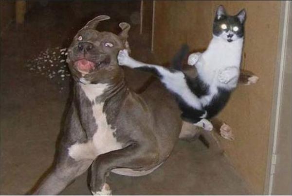 Cat Norris - funnypictures.me