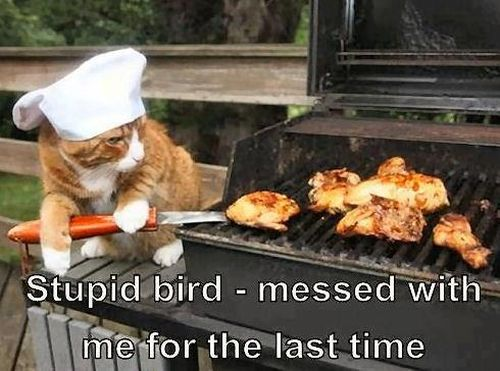 Stupid Bird - funnypictures.me