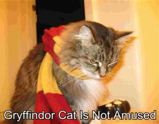 Pets as wizards - funnypictures.me