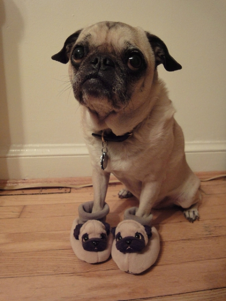 Pug Slippers - Funny pictures