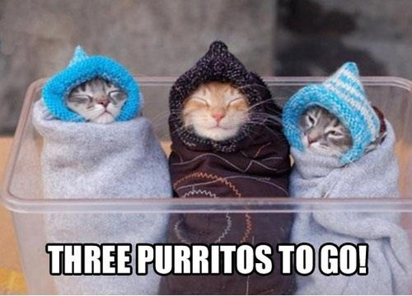 Three Purritos - Funny Pictures