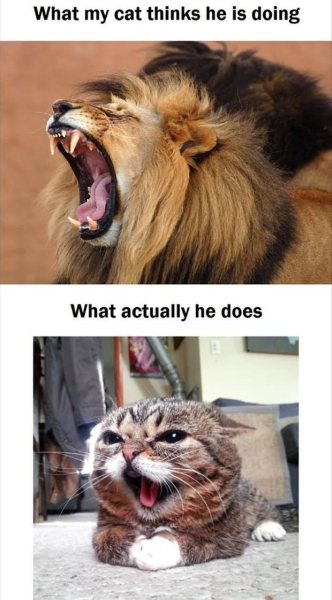 Angry cat - Funny pictures