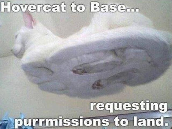 Cat meme flying - Funny-pictures