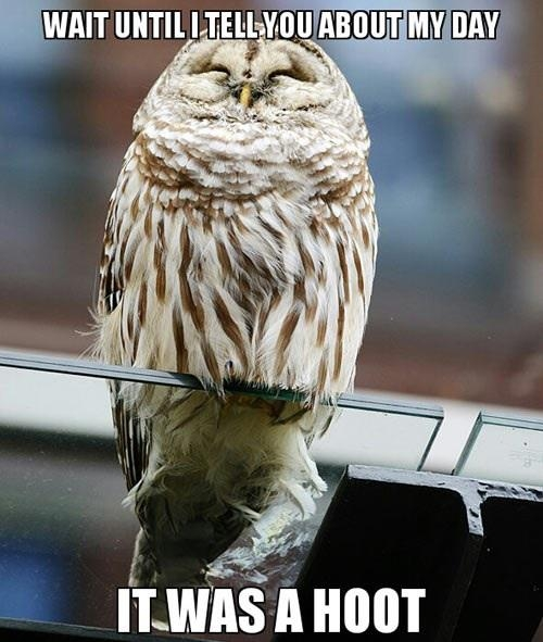 Hot day owl - Funny pictures