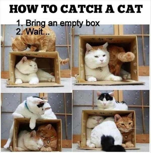 How to catch a cat - Funny pictures