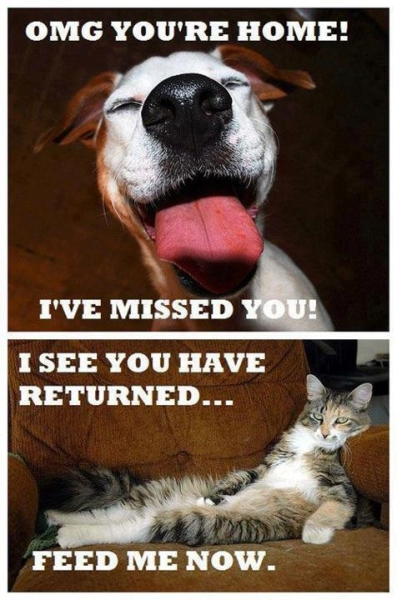 Differences - Funny pictures