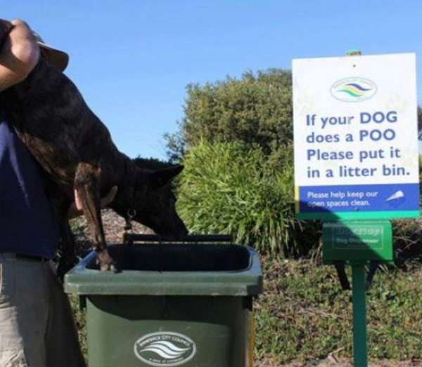 If your dog does a poo - Funny pictures