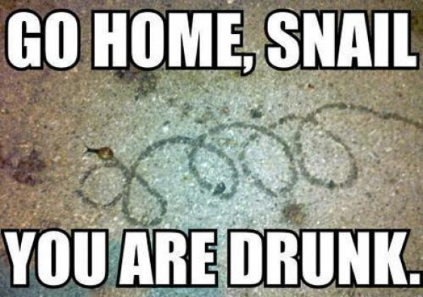 Go home snail - Funny pictures