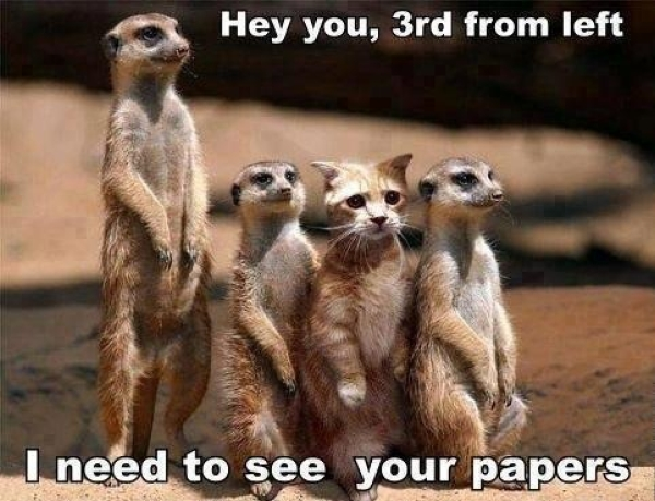 Hey you cat - Funny pictures