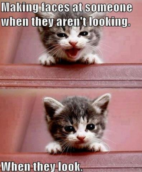 cat face cute kitten MEMEs