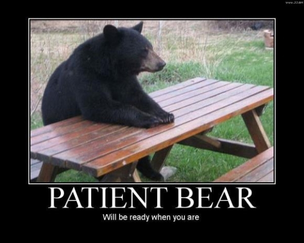 Patient bear - Funny pictures