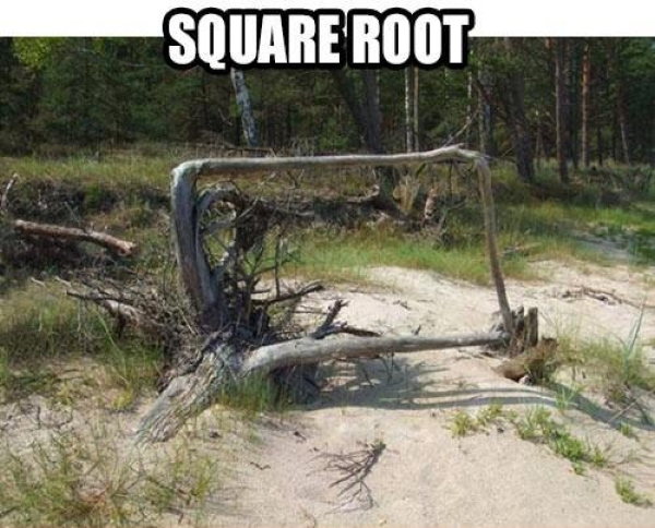 Square root - Funny pictures
