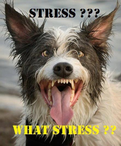 What stress - Funny pictures