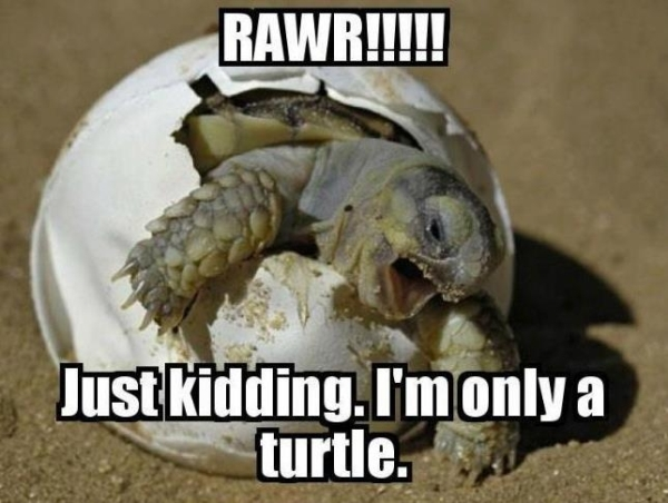 I'm only turtle baby - Funny pictures