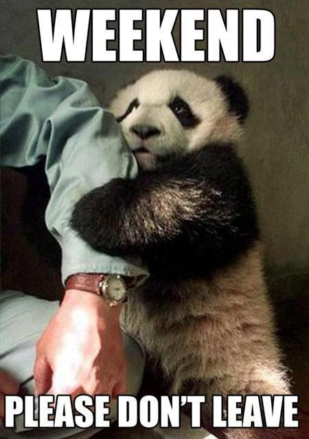 Don't leave panda bear - Funny pictures