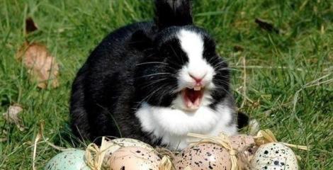 Little irish girl prank calls video ebaum 39 s world for Call the easter bunny phone number