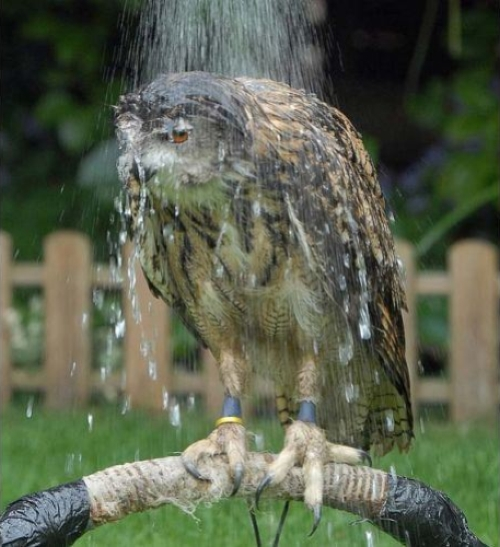 Hungover Owls - Funny pictures