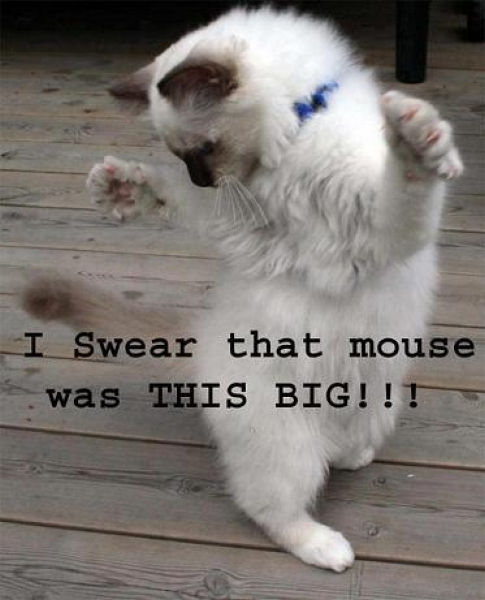 I swear mouse was that big - Funny pictures