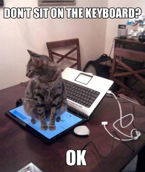 Don't Sit On The Keyboard - Funny pictures