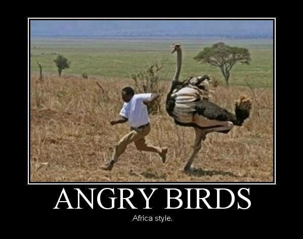 Meanwhile In Africa - Funny pictures
