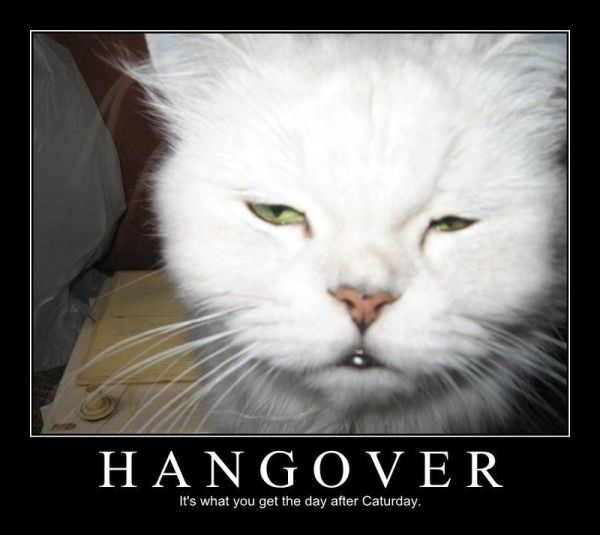 Hangover - Funny pictures