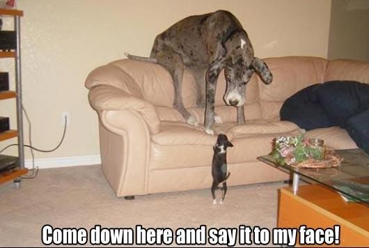 Come Down - Funny pictures