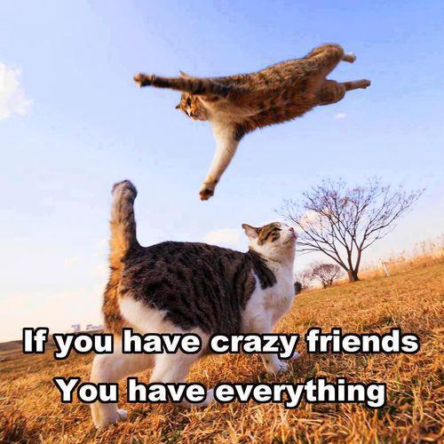 Funny pictures humor if you have crazy friends you have everything