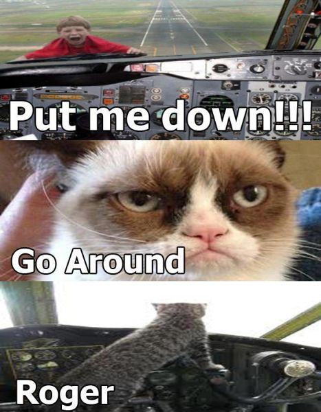 Grumpy Cat Pilot - Funny pictures