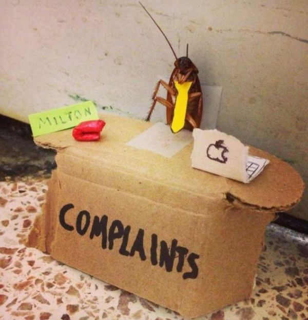 Complaints - Funny pictures