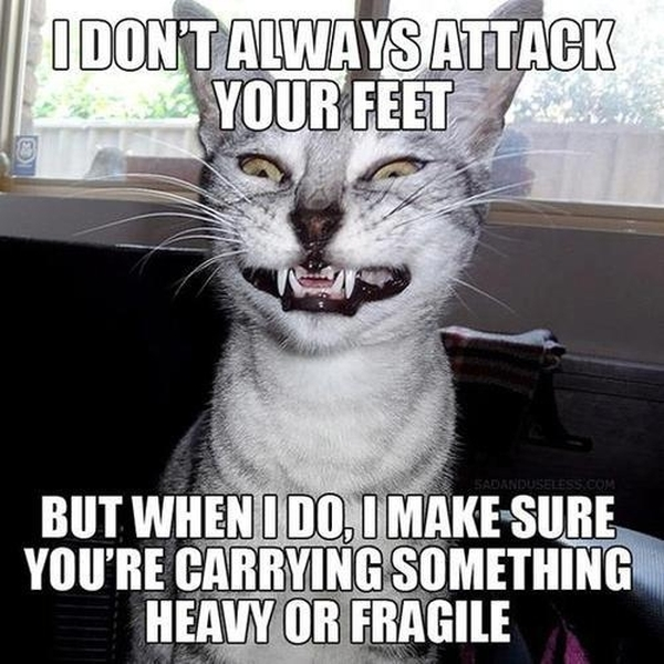 I Don't Always Attack Your Feet - Funny pictures