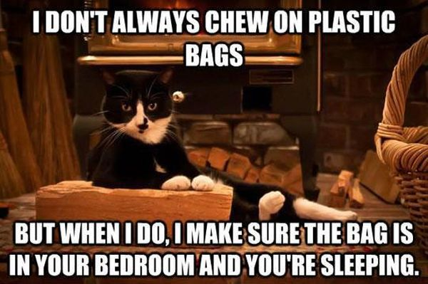 Considerate Cat - Funny pictures