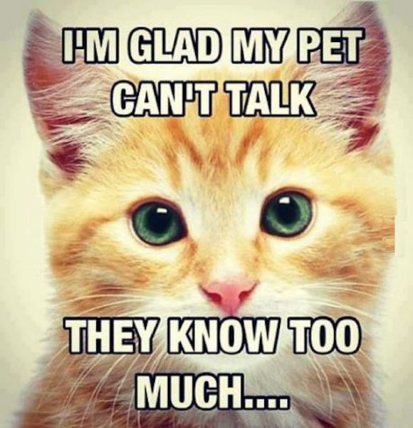 I'm Glad My Pet Can't Talk - Funny pictures