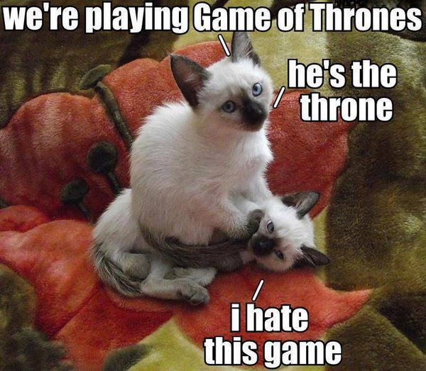 Game Of Thrones Cat Theme