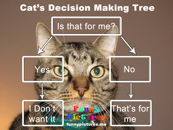 Cat's Decision Making Tree - Funny pictures