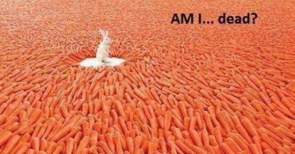 Bunny Heaven - Funny pictures